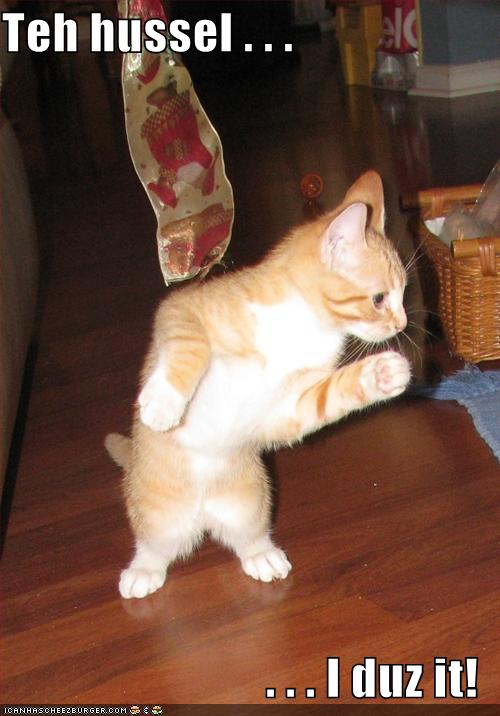 http://icanhascheezburger.files.wordpress.com/2009/07/funny-pictures-cat-dances-the-hussle.jpg